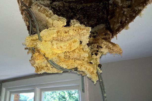 天花板滴下「金黃色濃稠液體」,撬開300年老屋「滿滿瘋狂衝出」他嚇壞!
