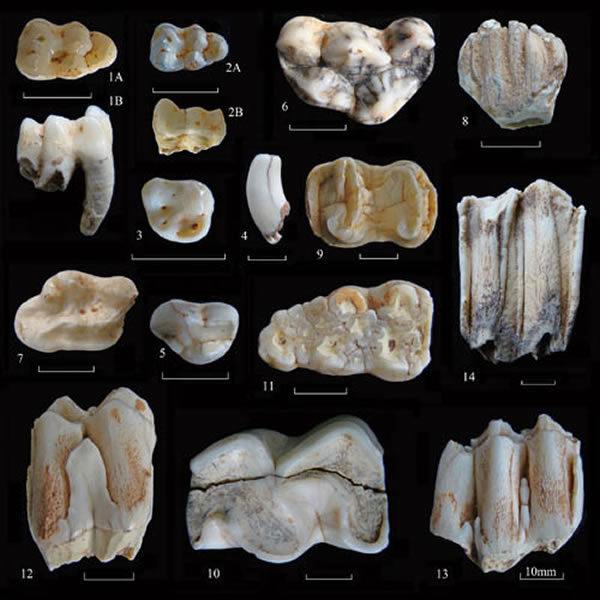 歷史書全都錯了,最新發現:中國人才是人類祖先!