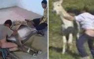 到底有多飢渴?15少年爆「同時染狂犬病」,爸媽一追問因為「集體強暴驢子」!驢子下場...