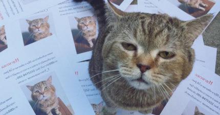 愛貓失蹤好緊張!貓皇回家驚見「滿地自己傳單」超鄙視:奴才眼睛還好嗎?