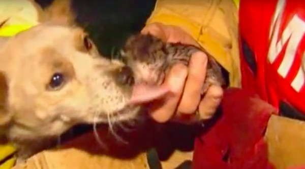 狗狗在火場裡奄奄一息「死都不肯走」,消防員把他抱起來後都動容了!