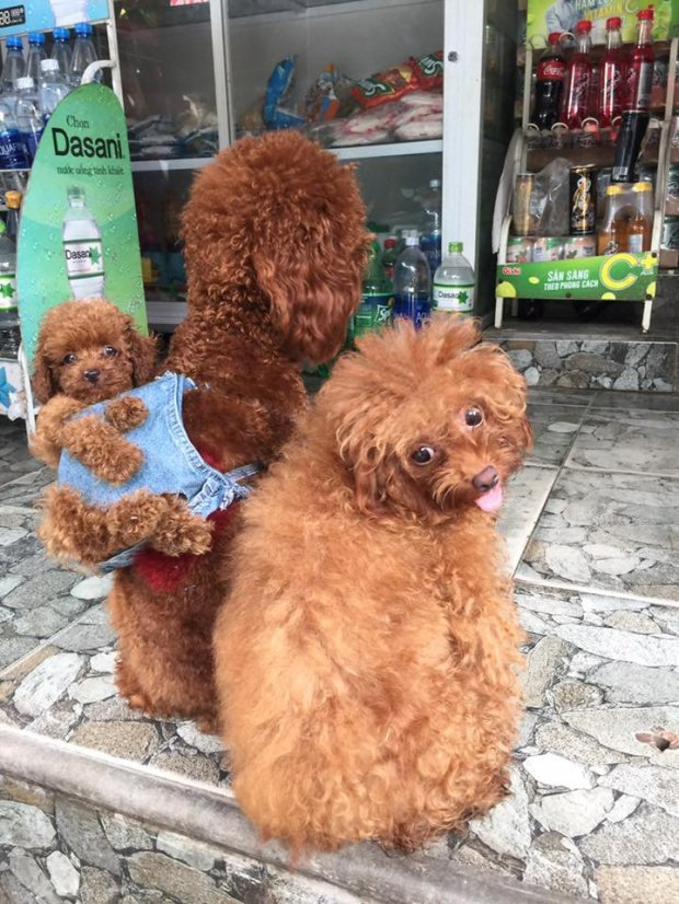 男子用舊衣服發明超可愛「小狗背袋」,讓狗狗爸媽能「背著小孩」跟上時尚尖峰!