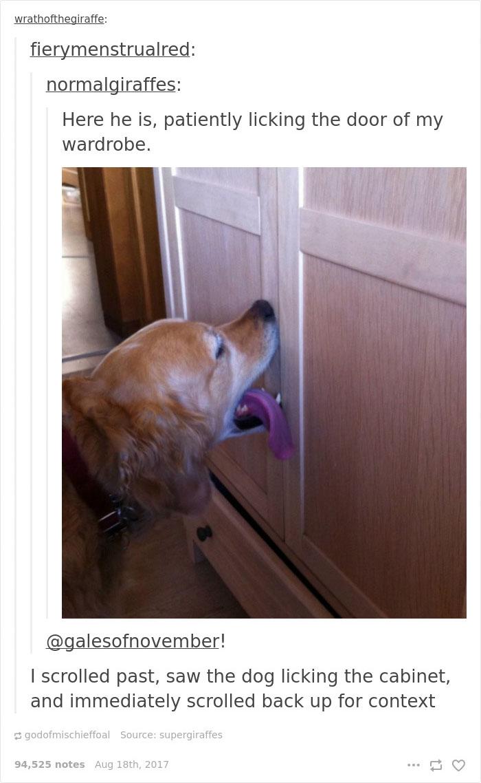 好不容易訓練黃金想出門要「舔前門」來暗示,直到搬家後狗狗竟然「壞掉了」超爆笑!