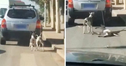 中國2狗被綁車後「遭高速暴拖著跑」!主人挨罵喊冤:「大家都誤會我了」(影片)