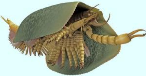 10個你會很慶幸都已經絕種的「超獵奇史前生物」!