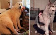 30張不知道自己有多大還「硬要坐大腿」的超萌大狗狗!