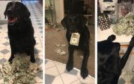 世界上「最愛錢」的狗狗!鈔票塞滿存錢筒、完全了解金錢的方便性!