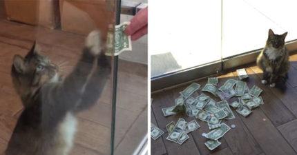 「超賊搶財貓」一看到錢就搶,原來都是為了做善事! (影片)