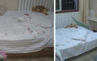 旅館一躺下馬上痛到尖叫,女子屁股慘被刺到「爆血」!一看凶手...太可愛了