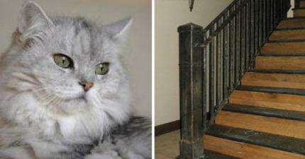 老太太聽到貓咪瘋狂的「喵喵喵」慘叫,她一查看:好險馬上去看!