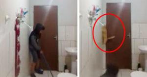 主人找愛貓來浴室幫忙抓老鼠,「貓咪瘋狂反應」笑翻3000萬網友!(影片)