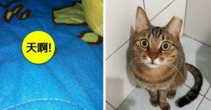 貓真的會報恩!喵星人「半夜偷偷獻禮」飼主嚇到差點漏尿!網揭「貓送禮2大原因」!