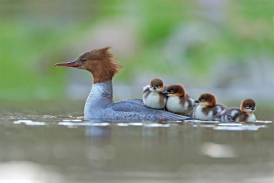 20張證明「鳥比人有趣」的「2017年鳥類攝影大賽」作品!