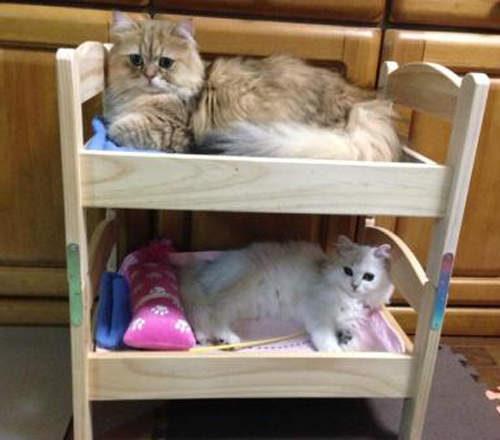 IKEA超搶手「小床」很適合孝敬貓老大,但不是每隻貓都適用!他太肥出現「羞恥畫面」不得不裝死...