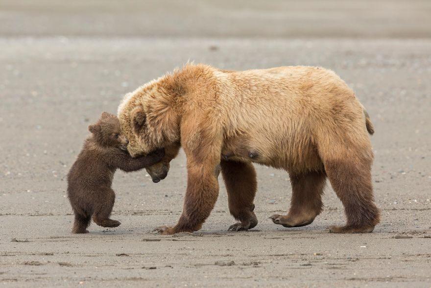 13張自然歷史博物館的「2017年野生動物攝影大賽」得獎作品!