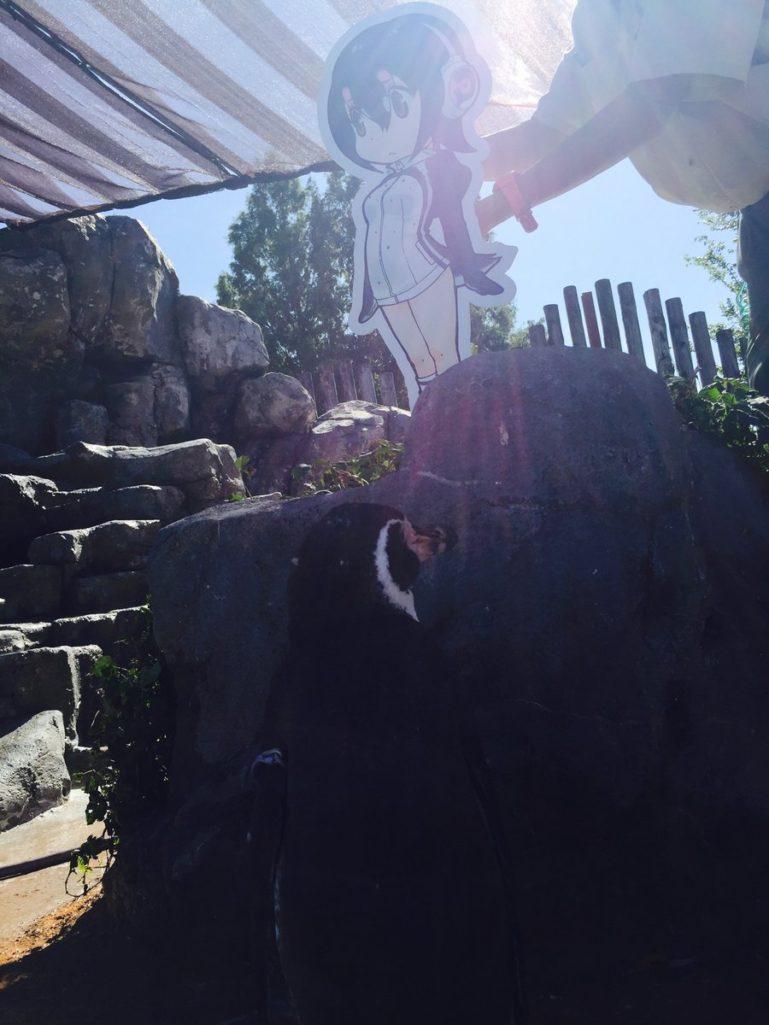 老婆跟小王跑了!企鵝爺爺找第2春「愛上二次元萌妹」!被迫分離「難掩超落寞背影」網友幫QQ