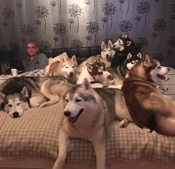 30張家裡有超過3隻毛小孩以上的「超混亂真相」照片!