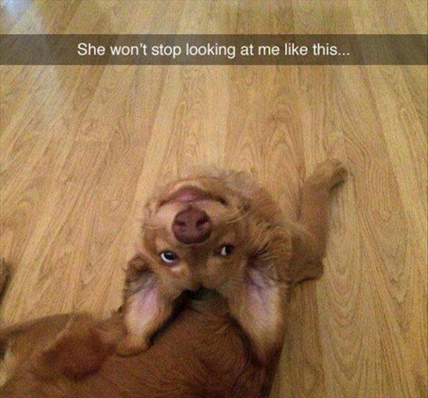 30張貓奴們不會懂的「超呆狗狗」爆笑生活照!