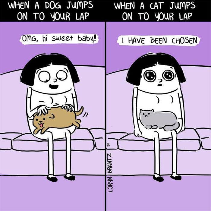 20個讓你點頭點到脫臼的「狗狗 VS 貓咪」超中肯生活習慣差異!