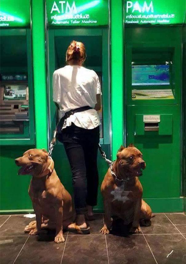 13個讓人超安心的「防止領錢被搶」超萌先進狗狗保安裝置
