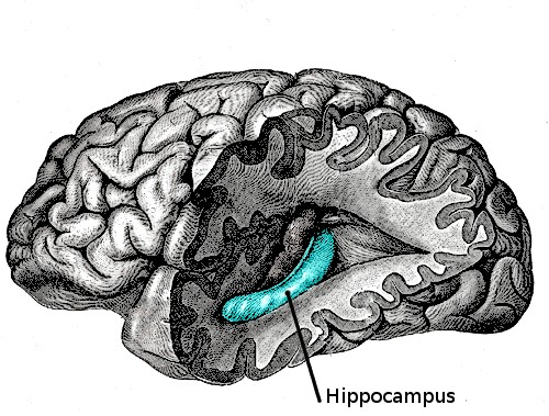 記憶力不好的人一點都不笨!科學家證實:他們大腦的運作,讓他們成了真正的天才...