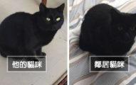 太神似!他不小心綁架了鄰居的貓咪,「超展開」讓全網笑翻!