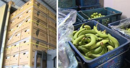 台湾香蕉第一次卖到杜拜「身价翻涨8倍」,把钱都还给农民!