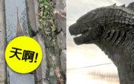 台灣路旁排水溝驚見「印尼水巨蜥」,挺大肚趴水面乘涼...路人看到全嚇傻:根本哥吉拉親戚吧!