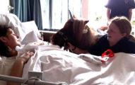 癌末媽媽「只剩幾天壽命」,請來「獨角獸」幫她跟5歲唐氏兒道別!(影片)