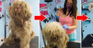 美容師暖心「半夜營業」讓狗狗找回「最美麗、真實」的自己,網讚:上帝派來的天使!