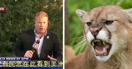 民眾驚見絕種的「美洲獅」出沒!記者LIVE實地探訪搞烏龍,「牠」亂入笑翻眾人(影片)