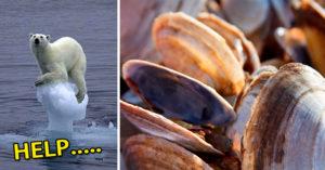 地球暖化竟是因為「蛤蠣放的屁太毒?」,專家「鬼打牆解讀」完才發現...元兇就在你我身邊!