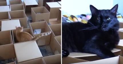 铲屎官用50个纸箱打造「猫咪迷宫」,从猫咪视野看迷宫「一整个超爽」!