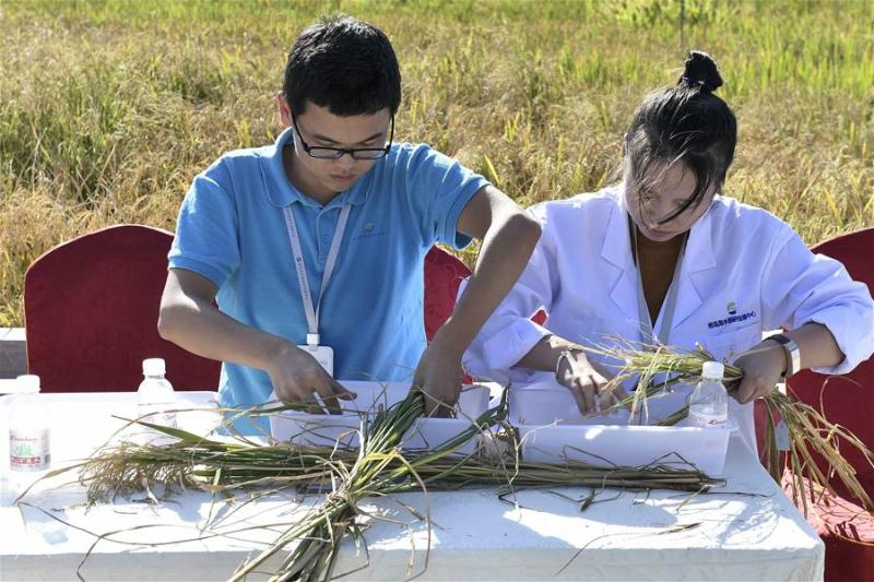 中國研發出在海水都能中出的稻米,改變人類歷史至少「多養活2億人」!