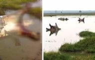 109隻河馬患怪病「離奇死亡」死狀怪異!專家:人類也有危險了!(影片)