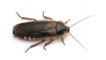 16個「TEEPR不說你可能一輩子不知道」的超冷門知識 全世界螞蟻「跟人類一樣重」!