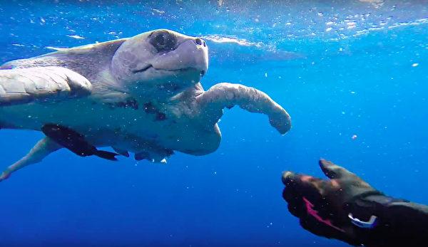 他發現「海龜被魚網纏住嚴重變形」出手拯救,「海龜獲救後舉動」暖哭500萬人!(影片)