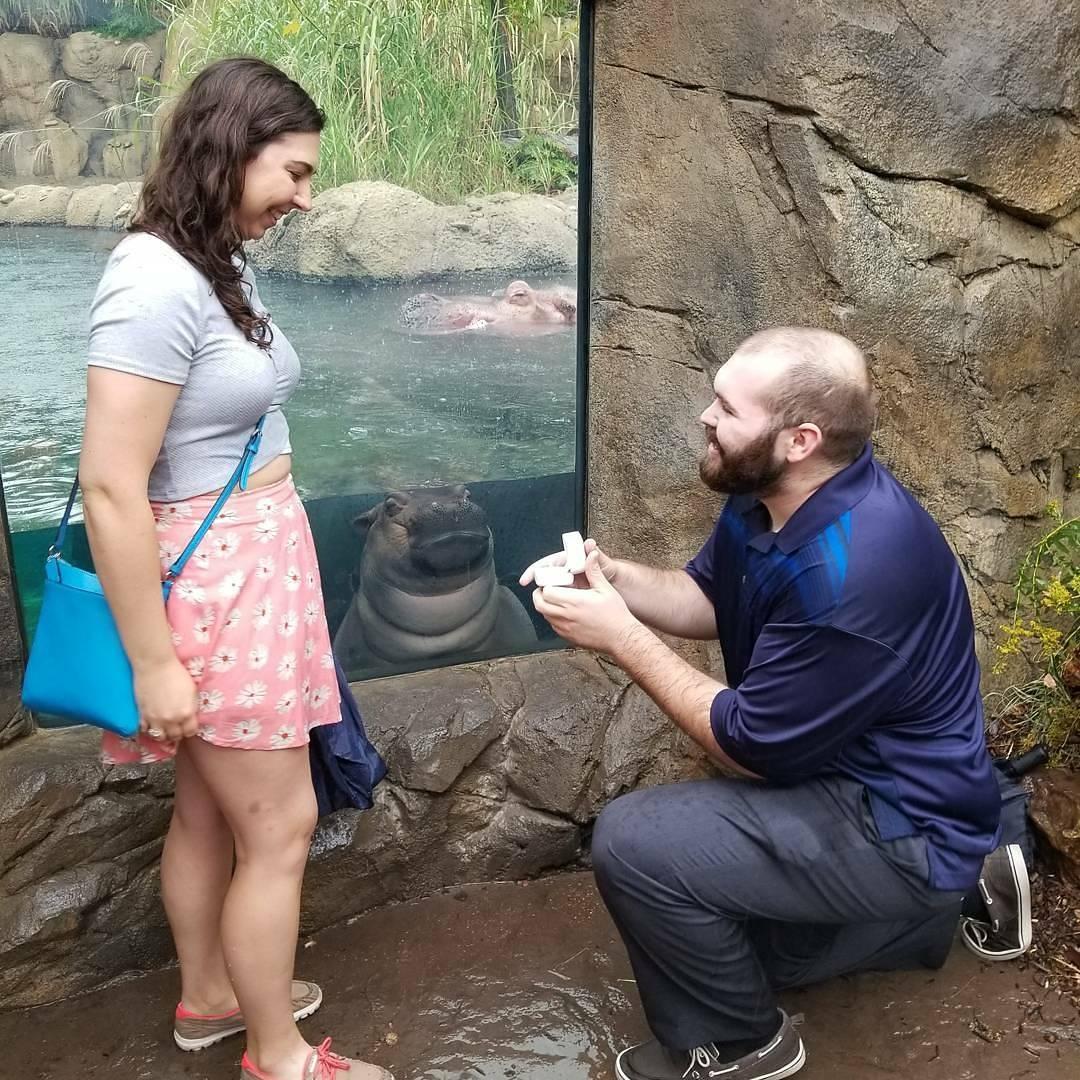 情侶的求婚照被「一隻可愛河馬」搶走風采,「可愛河馬臭臉」讓他們拍下最棒的一刻!
