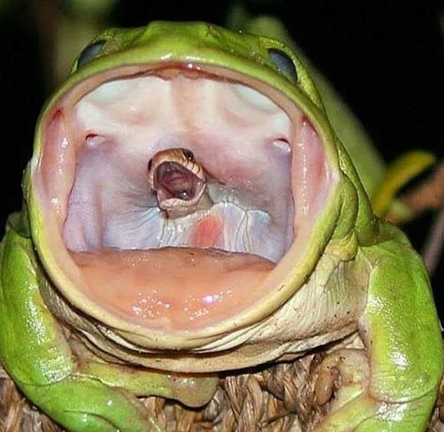 攝影師神捕捉「青蛙吞蛇瞬間」,網友狂P三張圖網瘋傳!