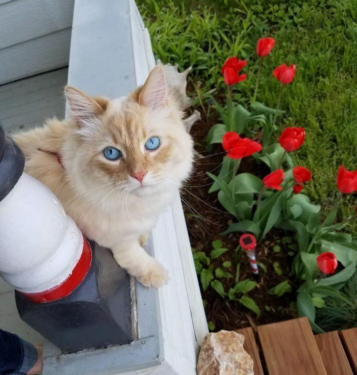 他嚴重懷疑家裡貓的「真實身分是迪士尼公主」,只要在窗邊就會有動物來打招呼!