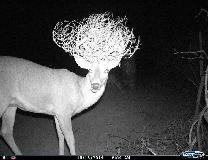 他在森林裡偷裝攝影機,拍下的畫面讓全網笑噴!(30張)
