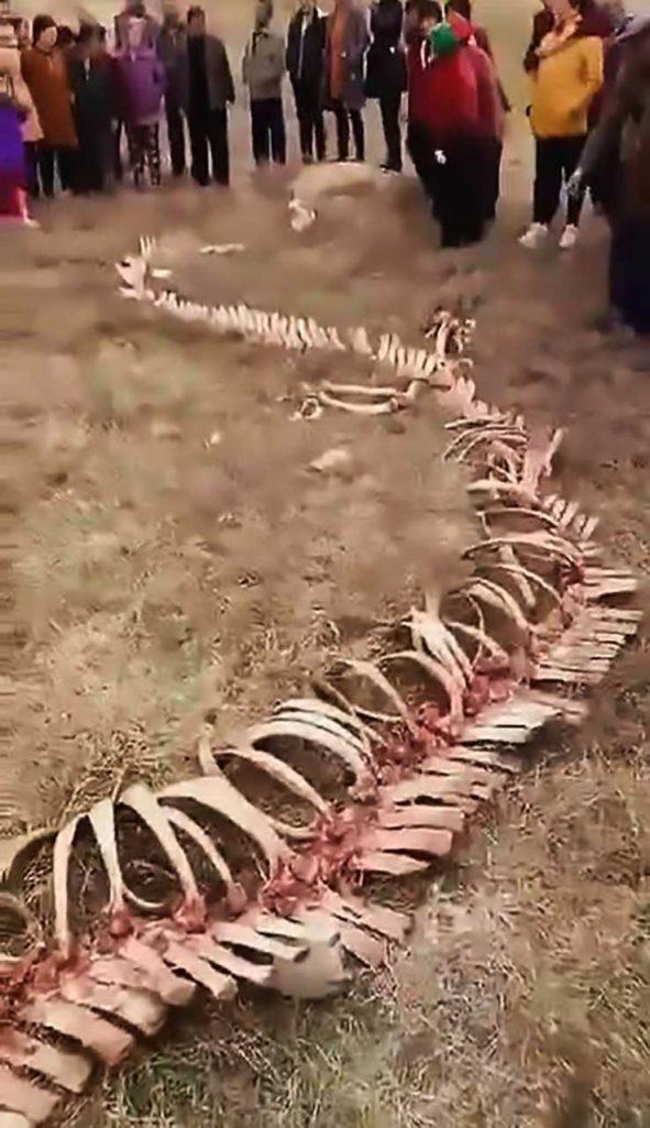 中國村民發現18公尺長「有角頭骨+兩隻小手」骸骨,跟「東方龍」相似度99%!(影片)