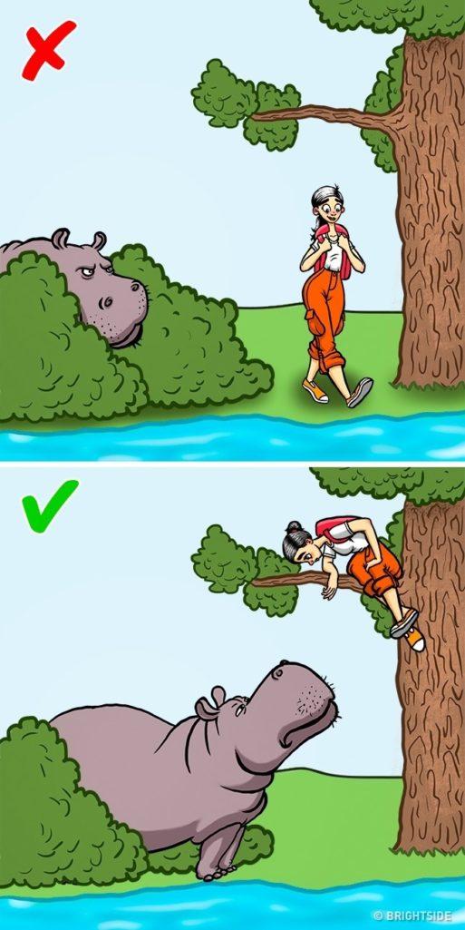 12個在野外「遇到野生動物危險攻擊」的正確自我保命技巧!