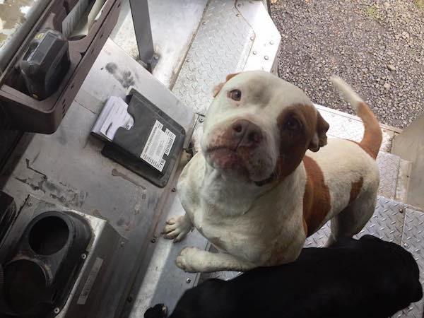 宅配人員把每天遇到的狗狗拍下來PO臉書,超萌作品集讓網友都想當送貨員了!(35張)