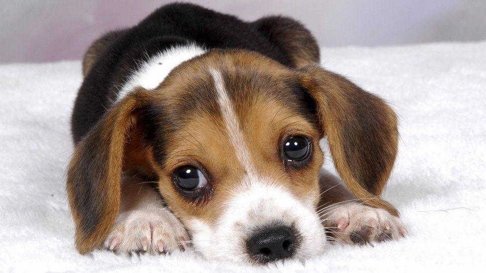 狗狗為什麼要擺出「無辜小狗眼」?當你不再看他時...太奸詐!