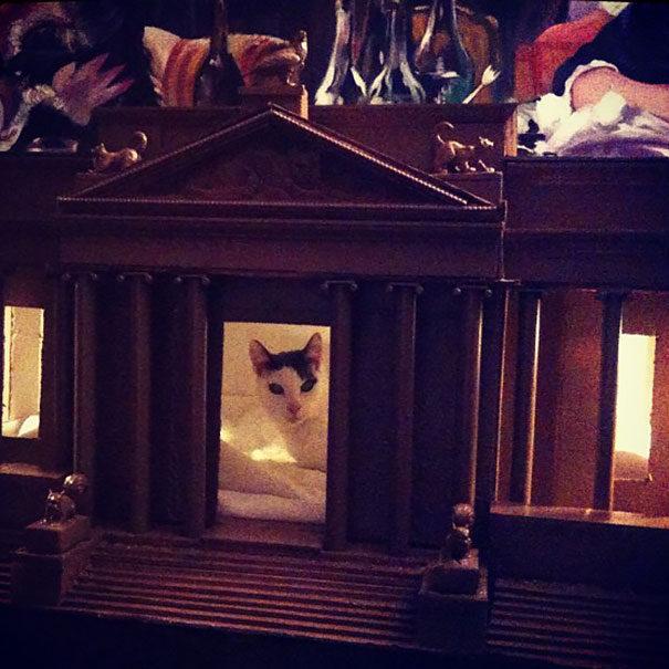 30隻被寵到「比人類還奢侈」的超幸福喵星人!還有自己的私貓電梯...