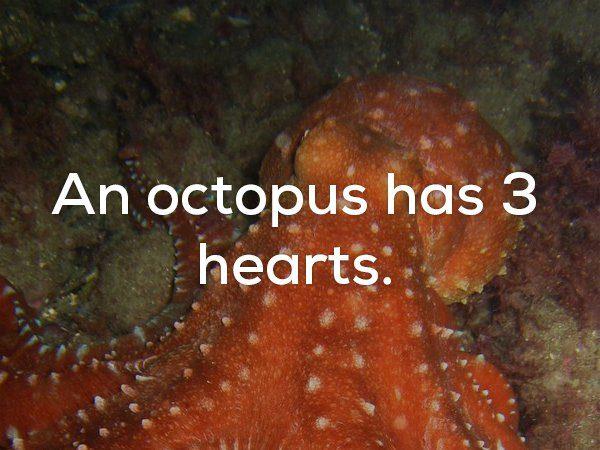 22個讓你恨不得「變成龍蝦移居大海」的地表最驚悚事實。講話卡卡的人可能是變態?
