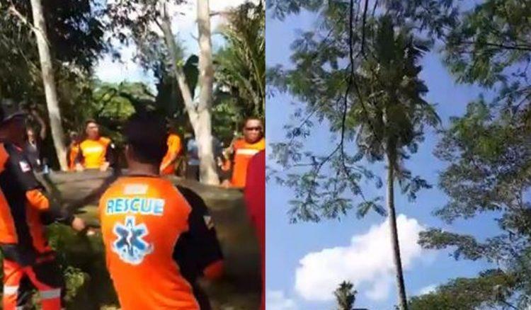 菲男爬上「18公尺高」椰子樹上3年都沒下來過,只靠母親送水和食物度日