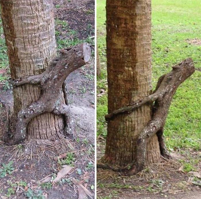40棵已經厭倦當樹「隨時會活過來」的百變驚奇造型樹精!