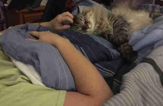 貓咪從來都不親近媽媽,某天突然異常地「撒嬌+討摸摸」原來是因為發現她肚子裡有新的親人了!